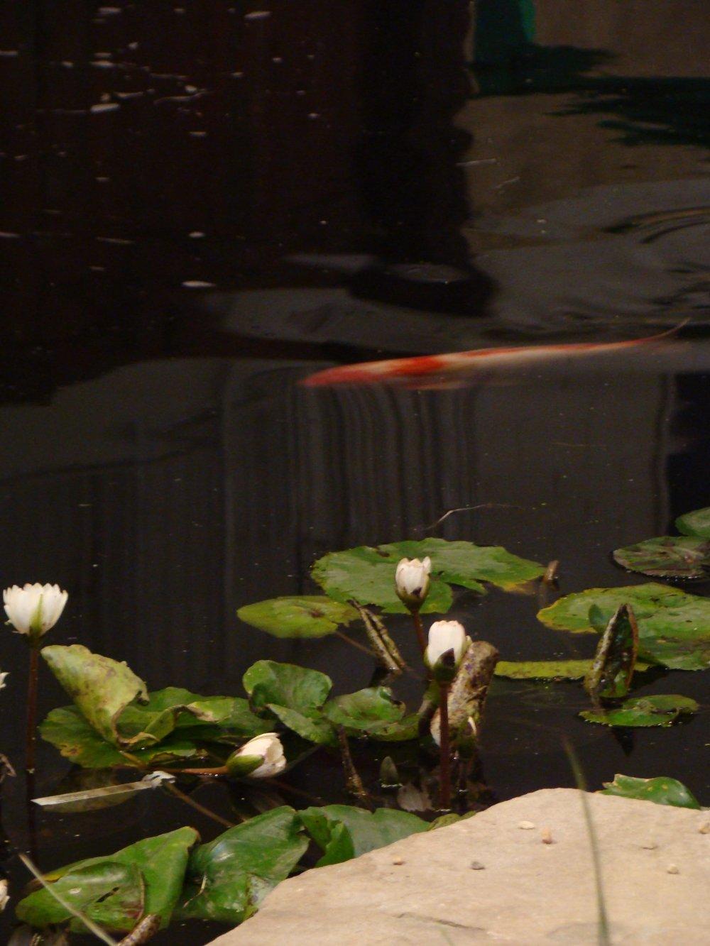Contemporary Asian Garden