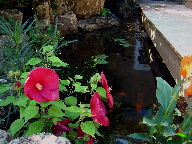 Small Koi Pond