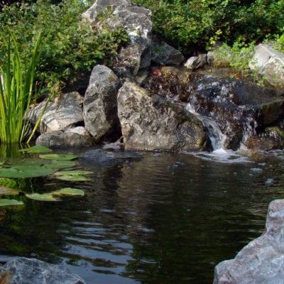 St Charles Water Garden
