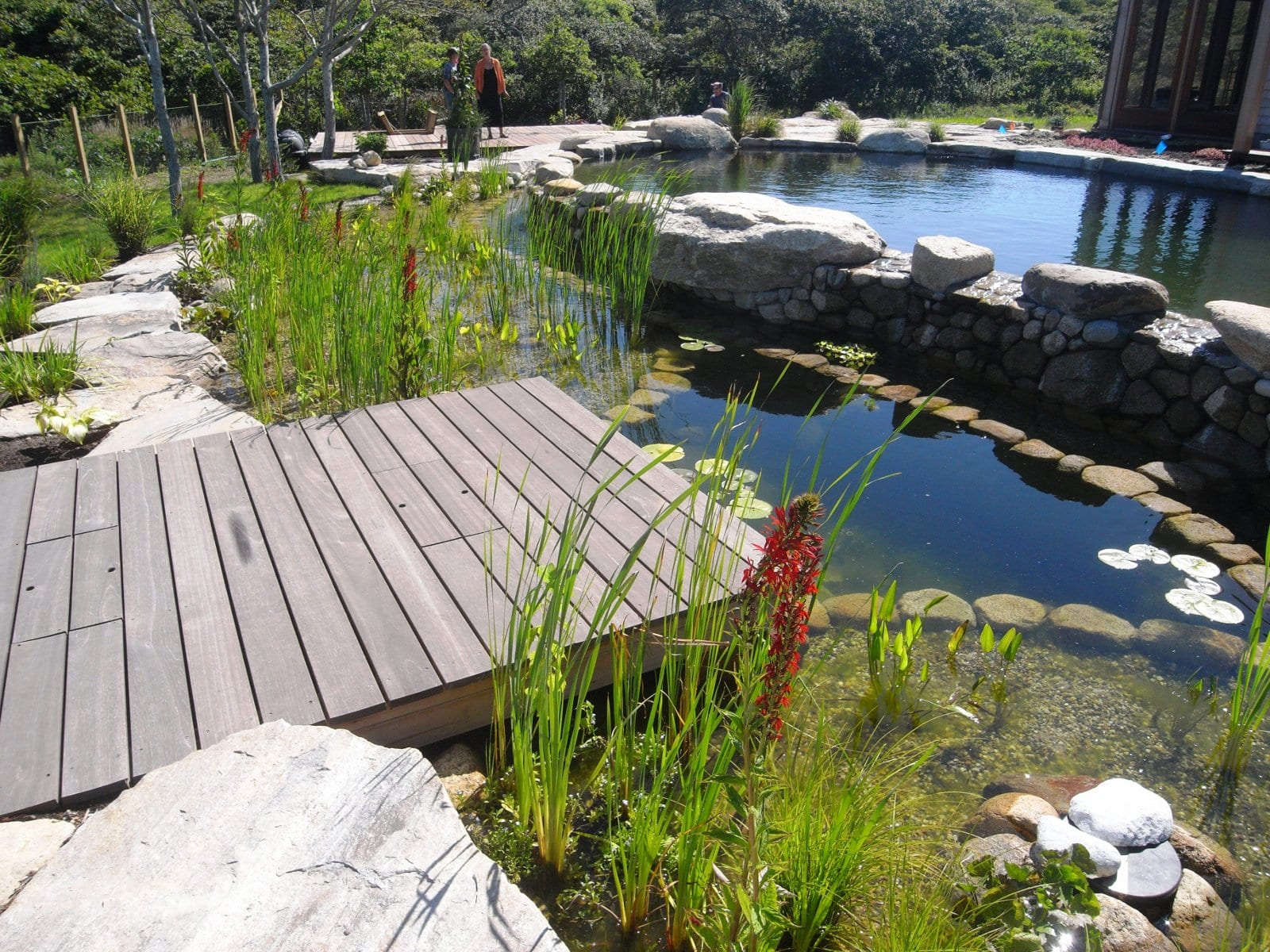 Reflections Water Gardens Natural Swimming Pool Convert Your Pool