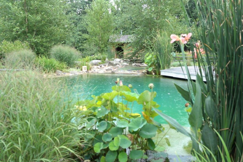 Ecofriendly pool