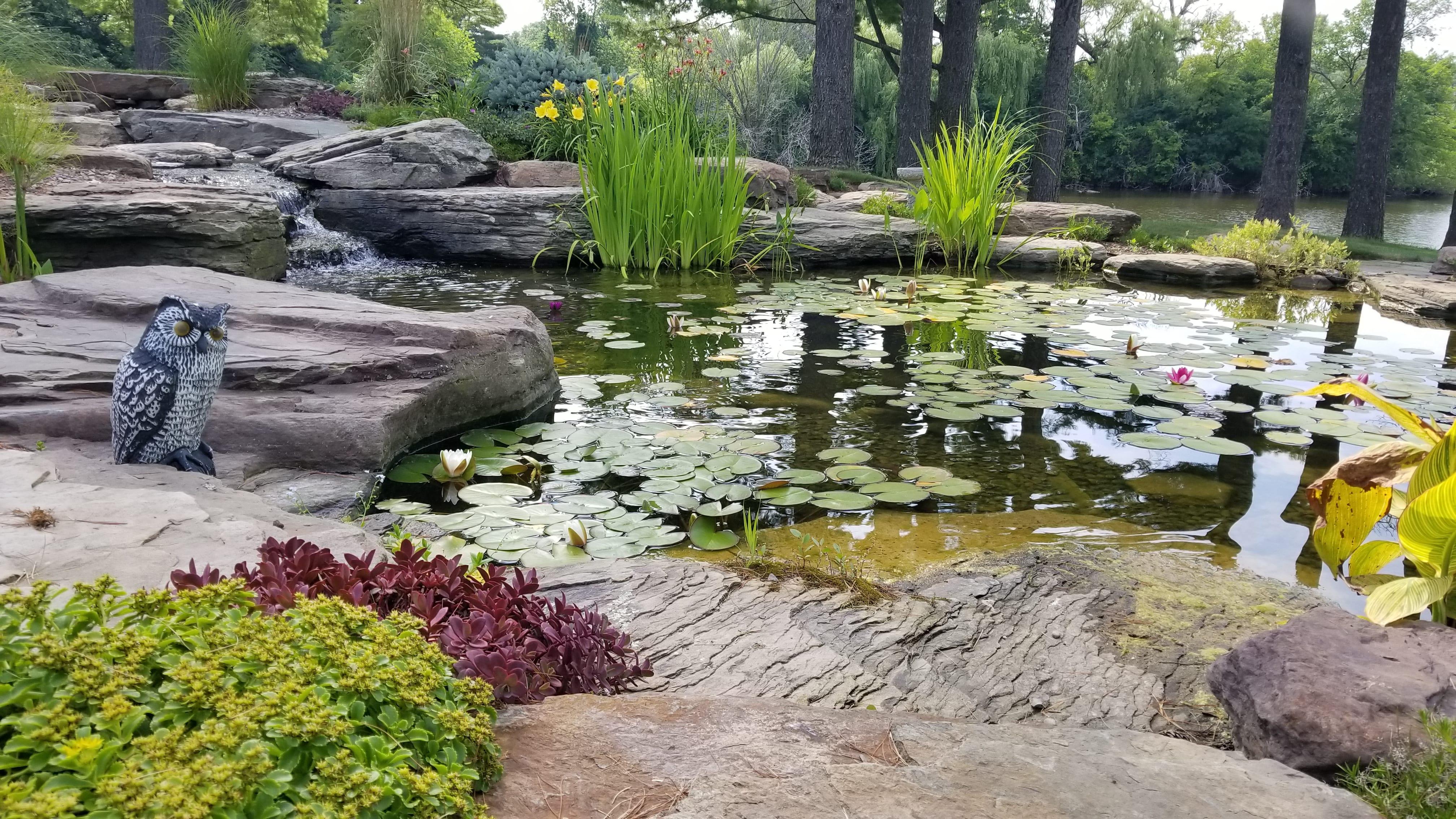 Serene Water Garden