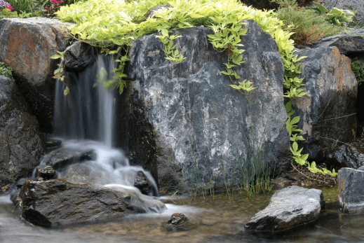 Natural Water Garden Project
