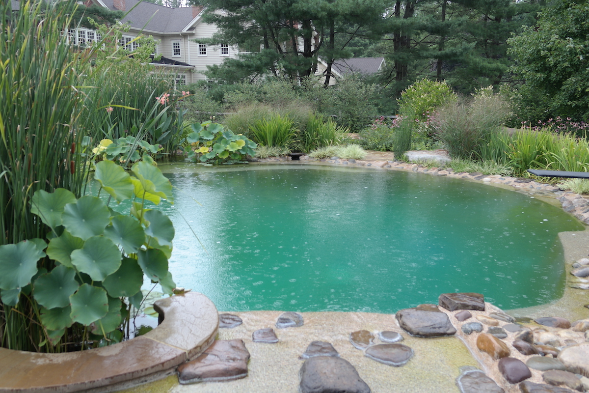 Natural Pool Deck